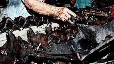 Photo of Нация запрещает потребление диких животных