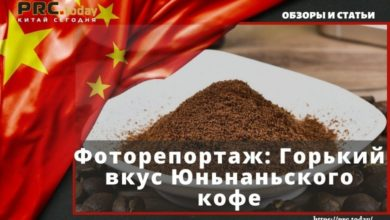 Фоторепортаж Горький вкус Юньнаньского кофе