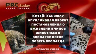 Китай: Ханчжоу опубликовал проект постановления о вживлении чипов животным в зоопарке после побега леопарда